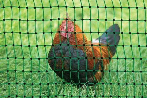 grüner Gartenzaun 50 m x 112 cm Hühnerzaun  14 Pfähle Hühner-Zaun Geflügelzaun Garten