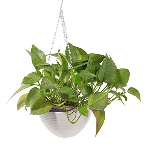 LVPY Blumenampel Seil Pflanze Aufhänger Pflanzenhalter Topfpflanzen Hängeampel Blumentöpfe für Indoor Outdoor Dekoration Weiß