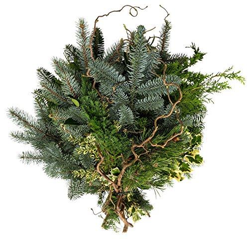 Echte Tannenzweige Koniferen gemischt - grünes Tannengrün frisch vom Gärtner - Lange haltbar - Pflanzen-Kölle