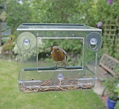 Garten Meile Einzigartige Klar Wandbehang Perspex Eichhörnchen Sicher Fenster Vogel Container Glas Betrachtung Vogel Füttern Absender Tisch Samen Oder Erdnuss Mit Wandbehang Saugnäpfe