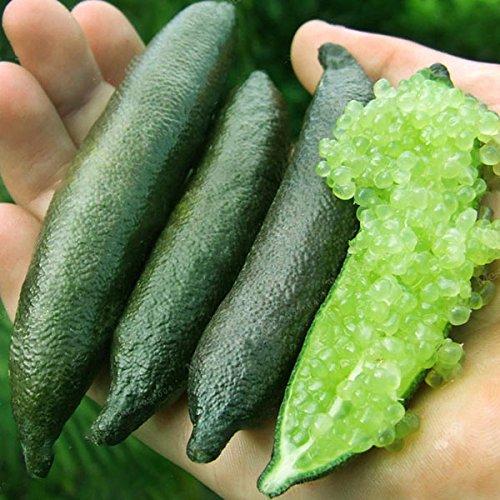 Inovey 20 StkPack Finger Limes Citrus Orange Samen Garten Balkon Bonsai Obst Samenkorn Pflanzen - Gelb