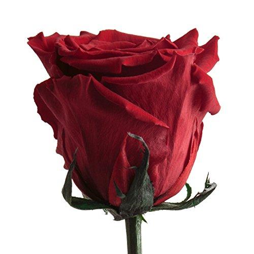 Ewige Rose haltbar 3 Jahre konservierte Rose die eine Ewigkeit blüht für Hochzeitstag - langlebige Rosen von ROSEMARIE SCHULZ Heidelberg Rot