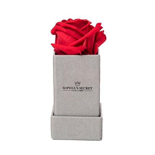 Rosenbox - Haltbare rote Rose - Sophias Secret in Geschenkbox 45 x 45 x 9 cm steingrau matt Leinen