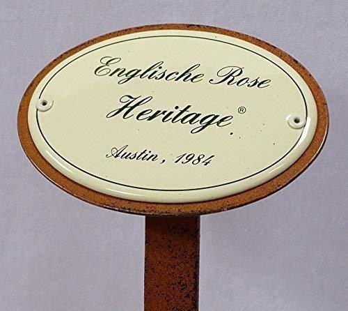 Rosenschild Rosenstecker Emaille Englische Rose Heritage Austin 1984