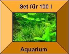 3 Töpfe  3 Bund Wasserpflanzen Aquarienpflanzen