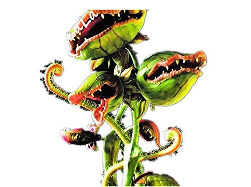 KINGDUO Egrow 100PcsPack Fliegenfalle Seeds Garden Vergossen Dionaea Dionaea Riesigen Fleisch Fressenden Pflanzen Samen-4