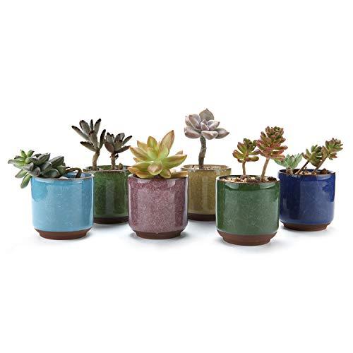 T4U 65CM Keramik Sukkulenten Töpfe Kaktus Pflanze Töpfe Mini Blumentöpfe EIS Crack Höher Serie 6 Fraben 6 Stücke Set
