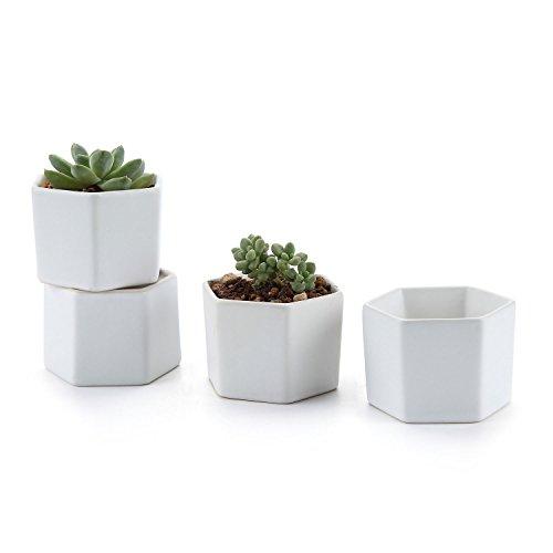 T4U 72CM Keramik Sukkulenten Töpfe Kaktus Pflanze Töpfe Mini Blumentöpfe Secheckig Matt Weiß 4er Set