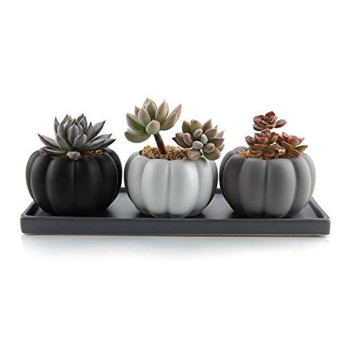 T4U 85CM Keramik Modern Kürbis Design Sukkulenten Töpfe Kaktus Pflanze Töpfe Mini Blumentöpfe - 3 Farben Set mit Grauer Untersetzer aus Keramik