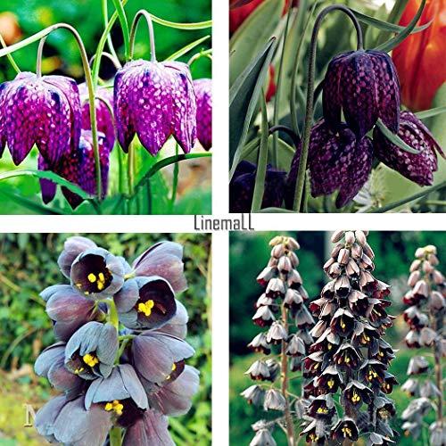 Go Garden 05 50Pcs Fritillaria Samen Bonsai Erbstück Fritillaria Meleagris Pflanze Blume Lm 02