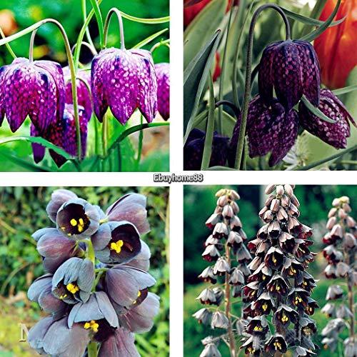 Go Garden 05 50Pcs Fritillaria Samen Bonsai Erbstück Fritillaria Meleagris Pflanze Ehe8 02