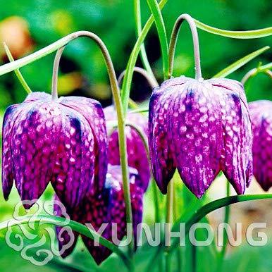 PinkdoseMixed Snake  39 s Head persischer Perlmutterfalter Bonsai Fritillaria meleagris Mischung Pflanze einfach wachsen Home Garten Abdeckung Pflanze 100PCS 6