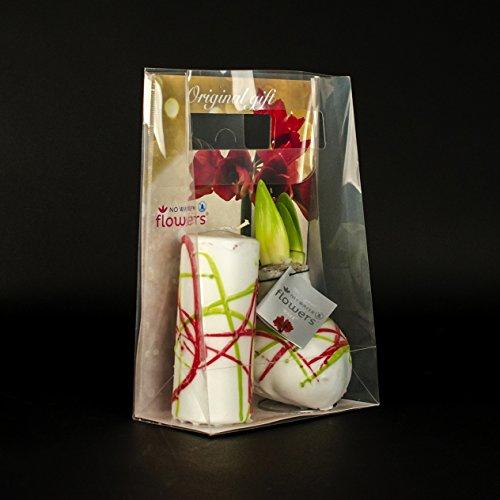 Inter Flowers - 1x Wax Amaryllis in Geschenkverpackung  passende Kerze - ROT - super Geschenkidee Zimmerpflanze Zwiebeln No Water - besonders ausgefallen ROT
