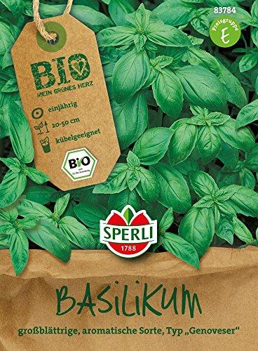 Basilikum - Bio-Basilikum Großes Grünes Genoveser - Bio-Saatgut von Sperli-Samen