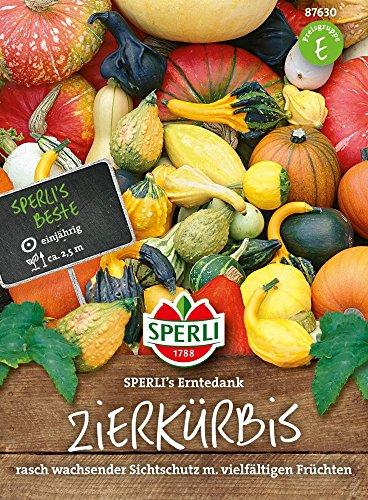 Sperli-Samen Zierkürbis Gross- und kleinfrüchtige Mischung SPERLIs Erntedank