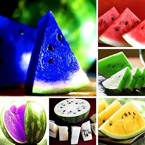 Wekold Wassermelone Mehrfarbig Samen Süße Frucht Samen Seltene Farbige Wassermelonen Samen Hausgarten