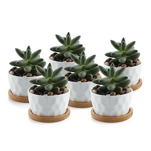 T4U 8CM Keramik Weiß Tüpfelchen Design Sukkulenten Töpfe Kaktus Pflanze Töpfe Mini Blumentöpfe mit Bambus-Untersetzer 6er Set